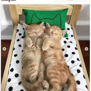 IKEAの人形用ベッド「ドゥクティグ」をネコ用のベッドとして使用する人が世界中で増殖中