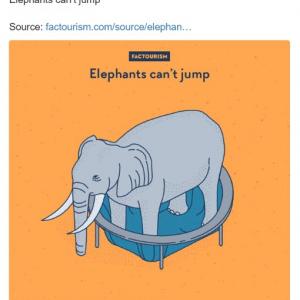 「ゾウはジャンプできない」ってウソ? ホント? 衝撃の事実5選