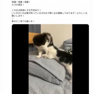 「保護の亜星」 ミキ亜星さんの保護猫活動が話題に