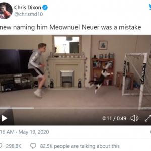 スーパーセーブを連発するネコのゴールキーパーが話題に →実はフェイク動画でした
