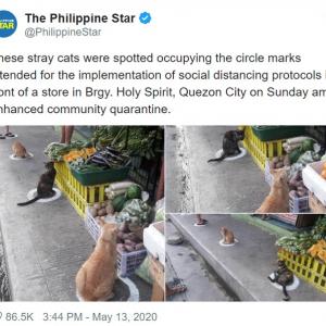 フィリピンではネコも社会的距離を確保しています