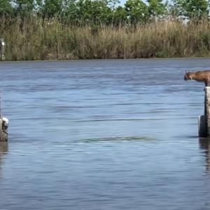 この距離をジャンプ!?きっと水に落ちるだろうと思って撮影していたら・・・