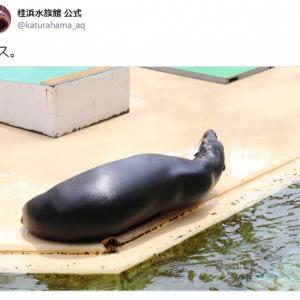 ナスなの? アシカなの? 桂浜水族館が投稿した写真に混乱させられる人続出「違和感ナス」