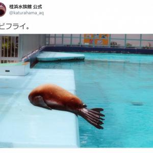 エビフライそっくりのトドの写真が大反響 「ちょっと焦げてる(笑)」「美味しそう」との声