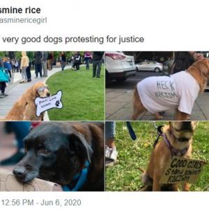 """""""Silence is Violence(沈黙は暴力)"""" 話すことは出来ないけど黙っていられないと抗議デモに参加した犬たち"""