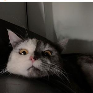 顔が「ハーフ&ハーフ」なネコ