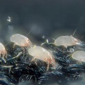 秋のアレルギーは『秋の花粉』と『ダニの死骸』に要注意