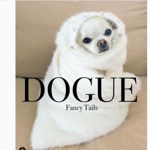 犬たちが「ヴォーグ(VOGUE)」の表紙になりきる「#DogueChallenge」