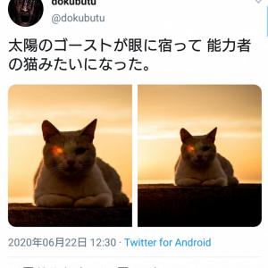 片目を赤く光らせた猫の画像が話題に 「秘めた力を持ってそうw」「最新型ターミニャーター」