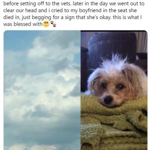 愛犬を失った飼い主が雲を見上げると…… 「天国から見守ってくれてるのよ」「気持ちが痛いほどわかるわ」