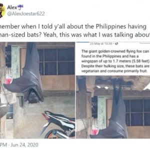 「人間と同サイズ」は本当? フィリピンで撮影されたドラキュラみたいなオオコウモリの画像が議論を呼ぶ