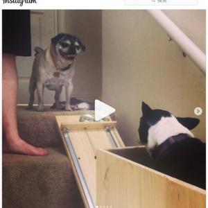 年老いた愛犬のために「Doggie-vator(犬用階段昇降機)」を自作した飼い主さん