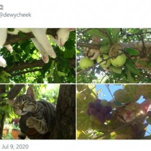 スヤスヤと気持ち良さそうに爆睡中のネコ 「ネコのなる木」「どういう夢を見ているのかしら」