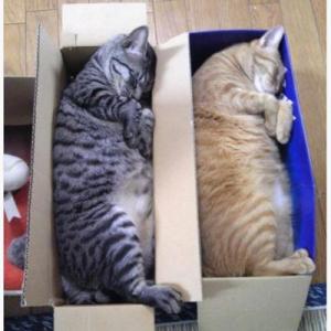 ネコたちの奇跡の寝相を捉えた選りすぐりの写真 5枚
