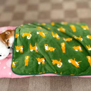 柴犬が布団でおやすみなさい ツイート投稿に「がわいずぎる」の声