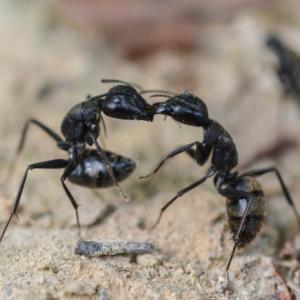 イソップ物語に出てくる「アリとキリギリス」、実は最初、夏を楽しく過ごしていたのはキリギリスではなかった!