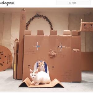 キャットタワーでは飽き足らなくてネコ用の砦や城を作ってしまった飼い主さんたち