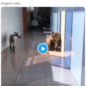 予想外の攻撃を放つネコ 「すごいテクニック」「ネコ好きな人に知的な人が多い理由」