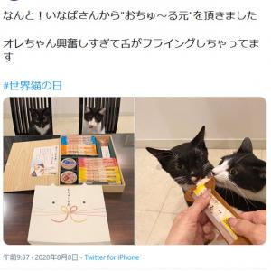 """藤あや子さん「なんと!いなばさんから""""おちゅ〜る元""""を頂きました」 可愛い猫の画像ツイートに反響"""