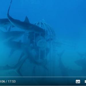 牛の血と魚の血 サメはどっちに反応するか?