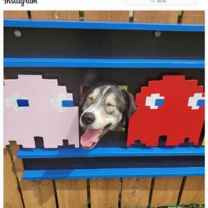 愛犬たちが顔ハメして楽しめるよう自宅のフェンスを改造する飼い主さん
