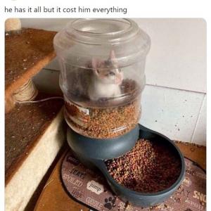 誰でもいいから助けてニャー! 欲張りすぎてエサの入った容器に自らを監禁してしまったネコ