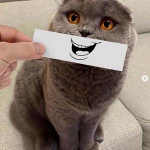 ウチの無表情なネコに表情つけてみました 「絵文字にして売るべきだ」「こういうことが簡単にできるアプリないかな」