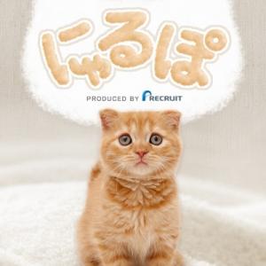 """お気に入りの猫は""""なでなで"""" 癒し系にゃんこ画像アプリ「にゃるぽ」"""