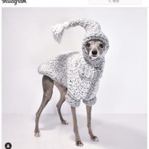 ワンコ界のファッショニスタ 「犬だけど一番好きなインフルエンサー」「天性のモデル」