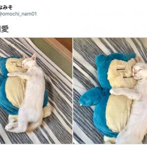 かわいすぎてキュン死! カビゴンと相思相愛な猫があまりにも尊いと話題「まんざらでもないカビゴンも良い」「おでこに小判がほしかった」