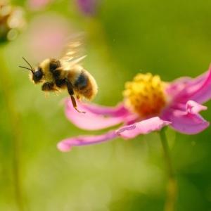 花と虫は騙し合う!その不思議で奥深い関係とは?
