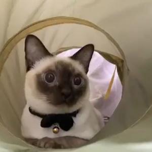 アイ・ニャン・フラーイ! 猫ちゃんが猛ダッシュで駆け抜けていく動画がTwitterで話題