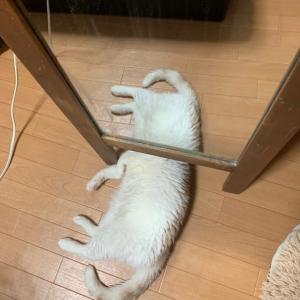 なんだこの生物は!?鏡の下で寝ているニャンコが凄いことになってしまった!