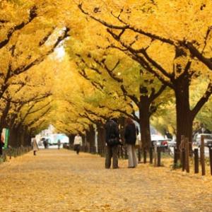 今週末に開催される東京のイベント10選【11月16日(金)~18日(日)】