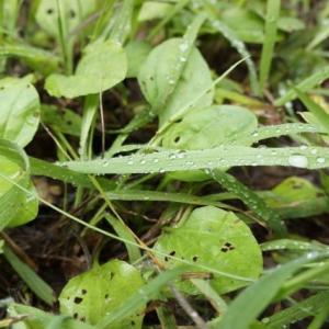踏まれた足まで利用する!人間が参考にしたい雑草のしぶとすぎる性質