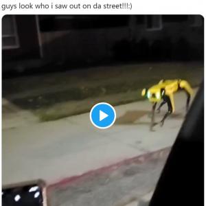 近所を散歩中の4足歩行ロボットにTwitterがザワつく 「サラ・コナー捜索中?」「恐怖でしかない」
