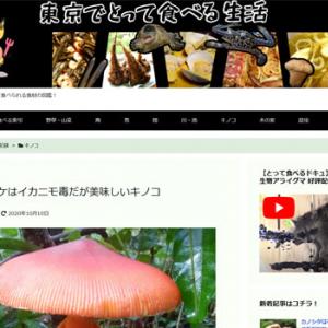 タマゴタケはイカニモ毒だが美味しいキノコ(東京でとって食べる生活)