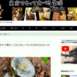 ルリハツタケで青キノコのブルーマリネを作りたかったのだが…(東京でとって食べる生活)