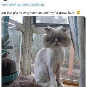 """ネコ好きな人必見のハッシュタグ「#unflatteringcatphotochallenge」 """"イケてない""""ネコたち 5選"""
