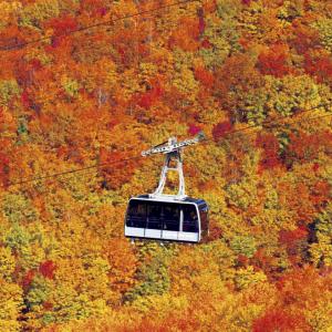 温泉街や公園、人気のアスレチックも 『じゃらん』遊べる絶景紅葉ランキングTOP10