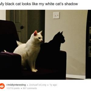 思わず二度見しちゃう光景5選 窓ガラスだらけの壁や影に見える猫など