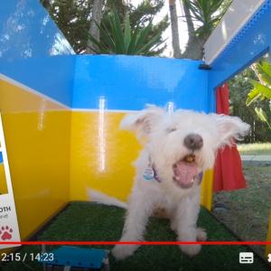 犬用の自撮りブースをレゴブロックで自作した発明家 「これは商品として販売すべき」「愛犬家にとっての必須アイテムだ」