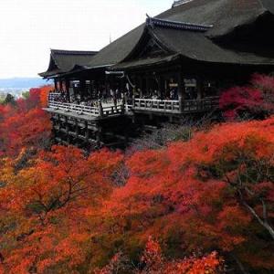 紅葉速報11/27 京都紅葉便り2012