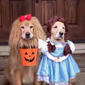 ハロウィンなんでお菓子ください 「何か言いたげな表情がたまりません」「この子たちは何着ても可愛いわ」