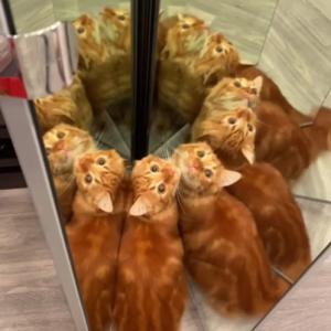 """鏡を使った遊びが大好きなネコ 「ネコの万華鏡」「""""全部ボクの親戚?""""みたいな顔してる」"""