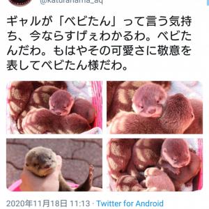 「もはやその可愛さに敬意を表してベビたん様だわ」 カワウソの赤ちゃんにメロメロな桂浜水族館のツイートが話題に