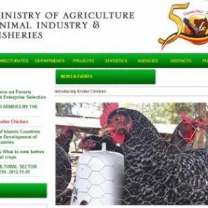 卵肉兼用のハイブリッドチキンはアフリカの貧困を救うか