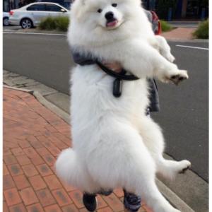 まだ自分が子犬だと勘違いしている甘えん坊な大型犬 5選