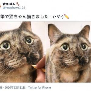 かわいすぎる猫の写真かと思いきや、実はこれ色鉛筆で描いたイラストなんです