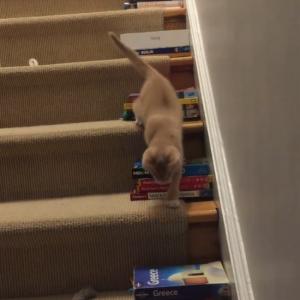 目が見えない子猫の階段下りトレーニング 「段差を小さくしてあげるのに本が役立つなんて」「愛情に満ち溢れている」